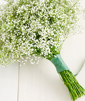 Simple Baby's Breath