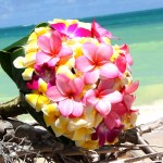 Yellow and Pink Frangipani Bouquet