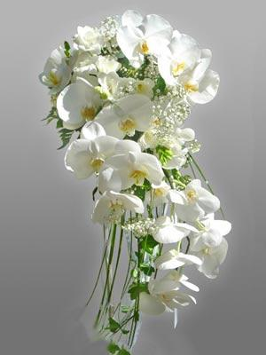 White Orchids Cascade