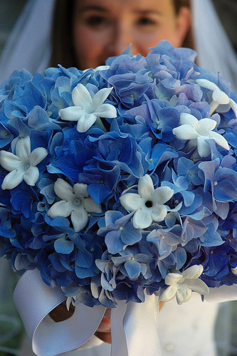 Hydrangeas and Stephanotis