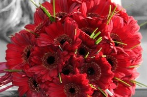 Red Gerbera Bridal
