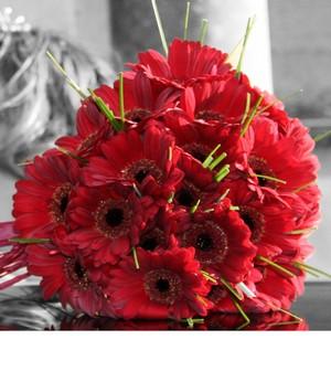 Red Gerbera Bridal