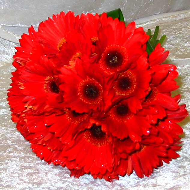 Bright Red Gerbera Bouquet