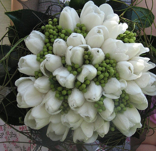 White Tulips and Green Berries