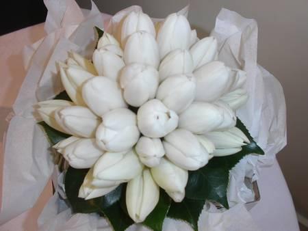 White Tulip Cluster