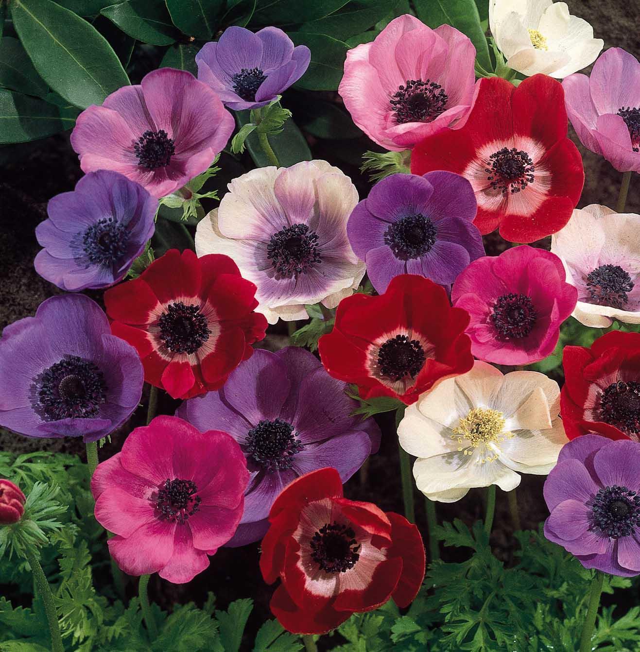 Spring Flowers - Bouquet Wedding Flower