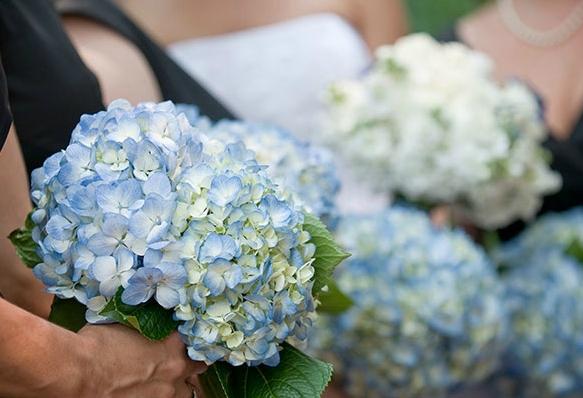blue hydrangea wedding
