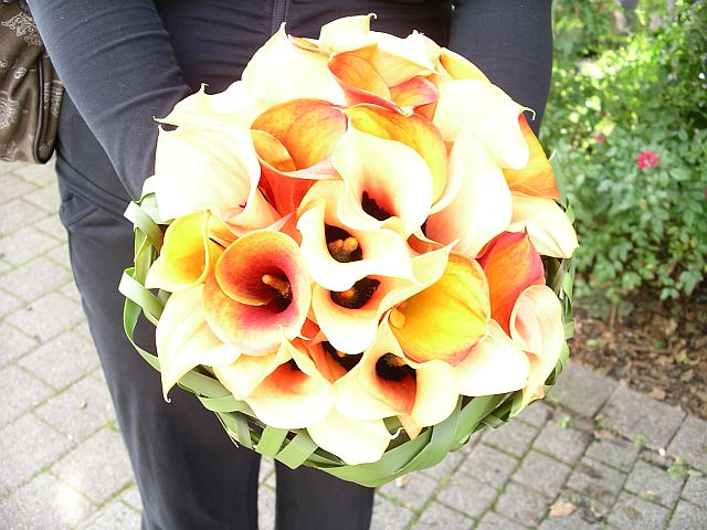 Beautiful bouquet made out of a lovely variety of orange calla lilies