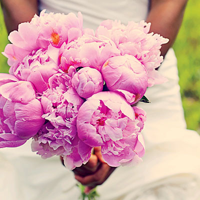 Lovely Pink Peonie