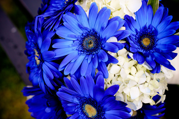 blue daisy bouquet