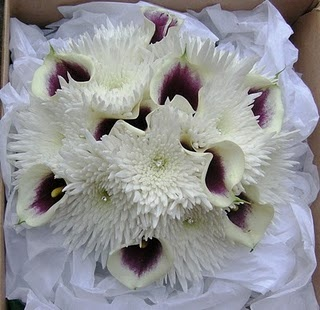 spidermums and callas