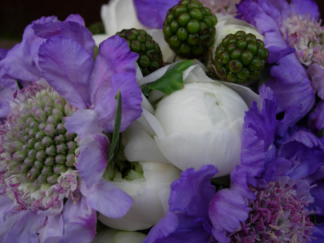 bouquet of lavender-colored scabiosas, white ranunculus, and blackberrie