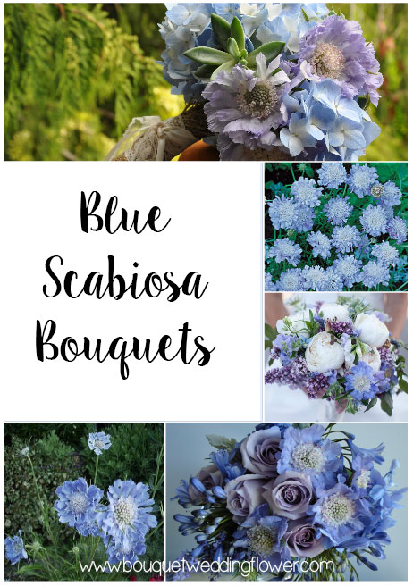 Blue Scabiosa Bouquets